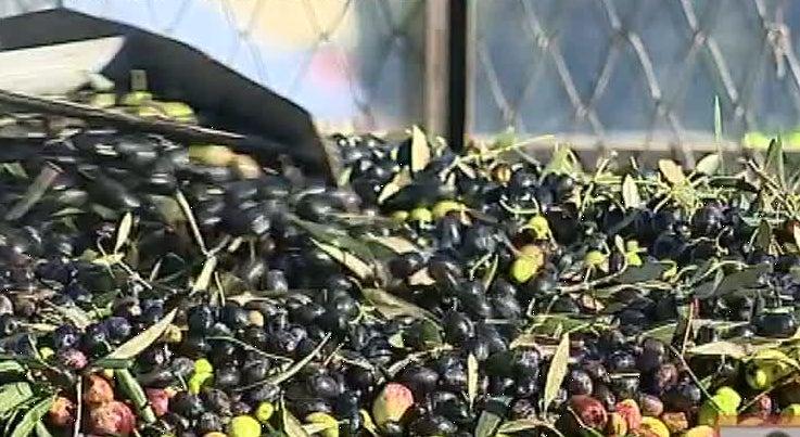 Economia - Lagar de azeite em Penamacor valoriza a gest�o dos res�duos