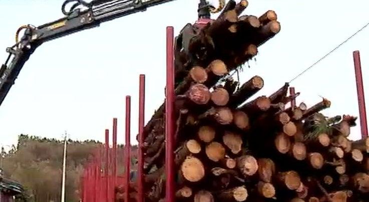 C�mara de �gueda quer adquirir terrenos florestais para prevenir fogos
