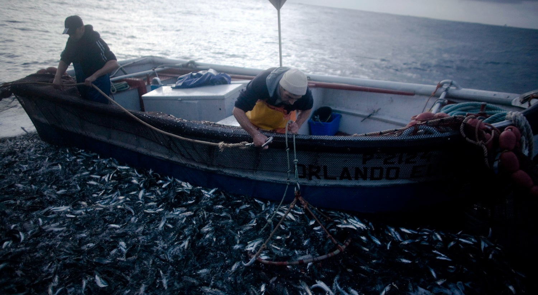 Pesca da sardinha deverá ser proibida no norte