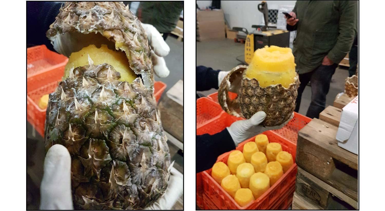 Rede criminosa traficava cocaína dentro de ananases