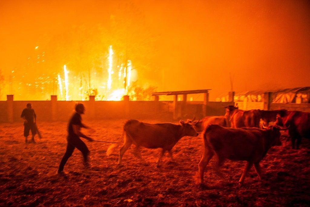 Incêndios: Balanço sobe para 27 mortos - Proteção Civil (ATUALIZADA)