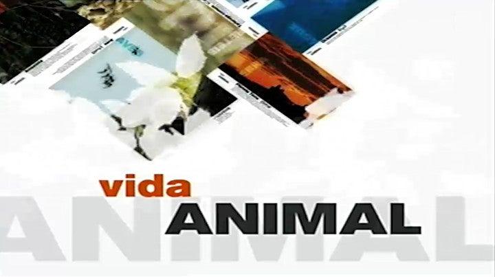 Vida Animal em Portugal e no Mundo