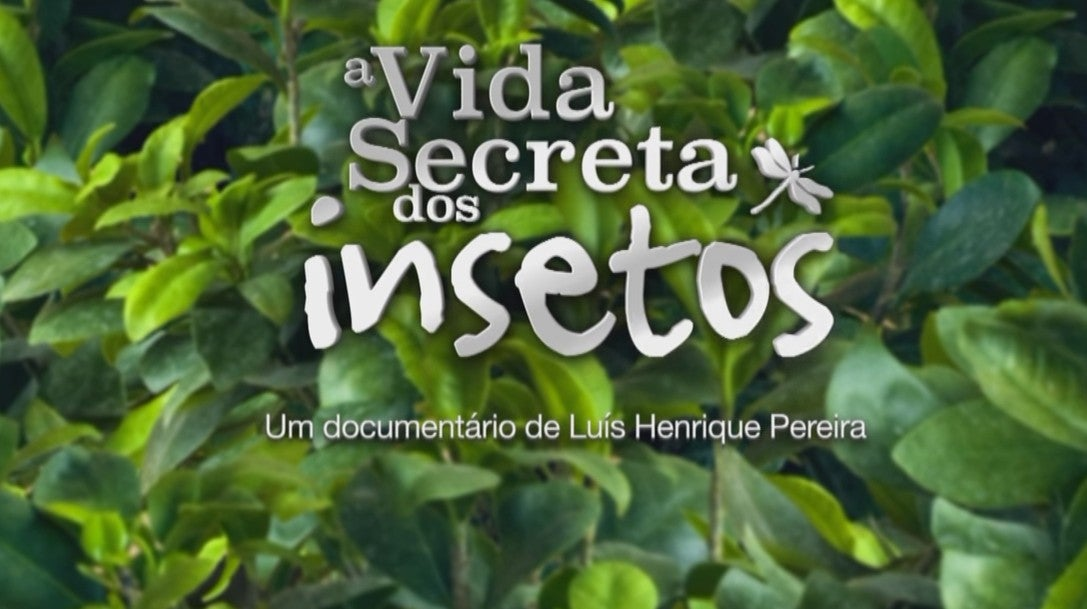 A Vida Secreta Dos Insetos Documentarios Natureza E Vida