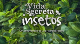 A Vida Secreta dos Insetos