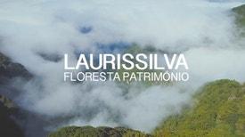 Laurissilva - Floresta Património