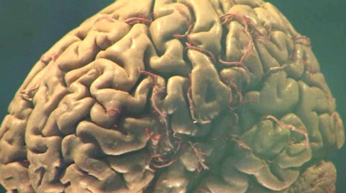No Cérebro de um Génio