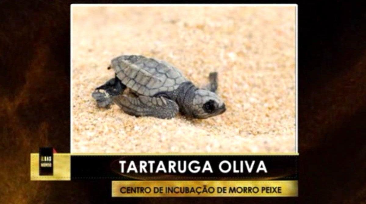 Morro Peixe - Praia dos Tamarindos / Búzios com Fruta-pão