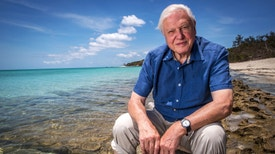 David Attenborough e a Grande Barreira de Coral - Construtores