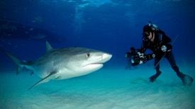 Tubarões na Minha Objetiva