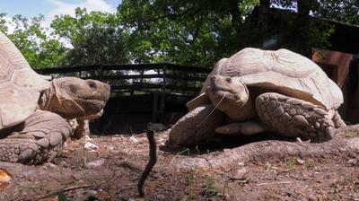 Play - A Aldeia das Tartarugas