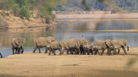 África Colossal - Delta do Okavango