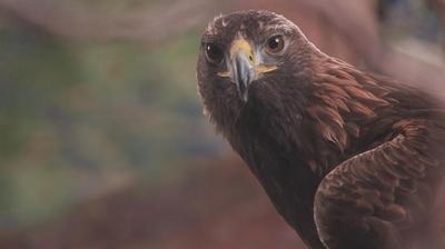 Play - Albânia Selvagem: No Território da Águia