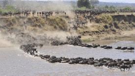 Masai Mara: A Grande Caçada