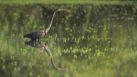 Encontro D´Águas - Segredos da Ria e do Baixo Vouga Lagunar