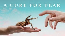 Uma cura para o medo