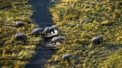 Play - Okavango: O Rio de Sonhos