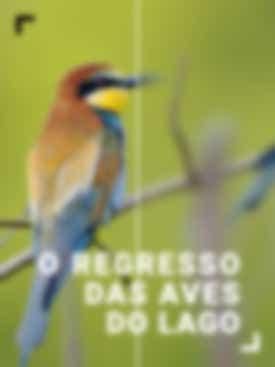 O Regresso das Aves do Lago