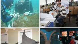 História Natural - O comportamento de mergulho da baleia de bico, Zifius Colaboração de Manuel Biscoito biólogo conservador do Museu de História Natural do Funchal