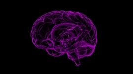 Nesta edição da rubrica Era uma vez o cérebro falamos de intuição e empatia com o psiqiatra Pio Abreu
