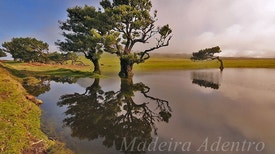 Madeira Adentro - Baía do Pesqueiro