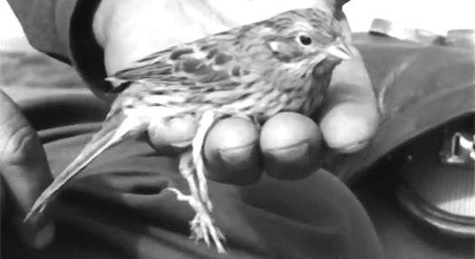 A Reserva Ornitológica de Mindelo