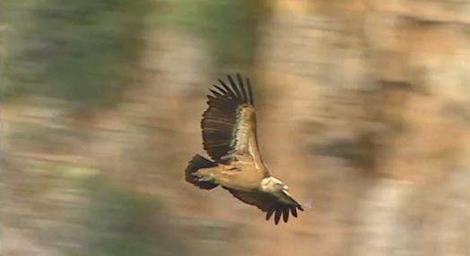 Aves de Rapina em Portugal