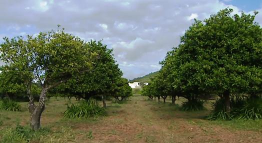 Caldeirão, o Outro Algarve
