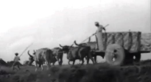 Carro de Bois e Rendeiras do Nordeste