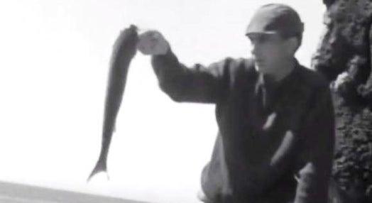 Aves Aquáticas e Pesca