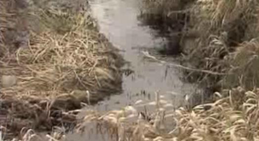Poluição no rio Zêzere