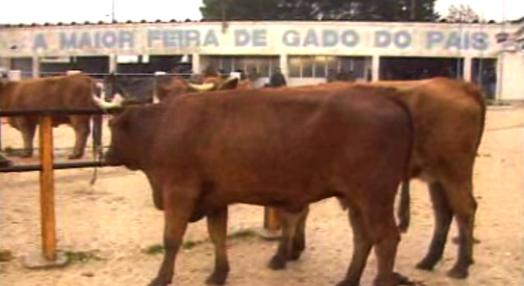 Negócio da Carne em Portugal