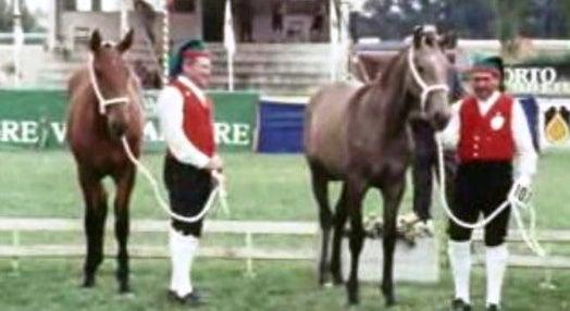 2º Concurso Internacional do Cavalo Lusitano