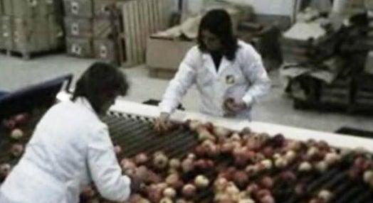 Fruticultura – I