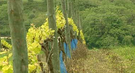 Quinta de Chocapalha e Sociedade Agrícola da Labrugeira