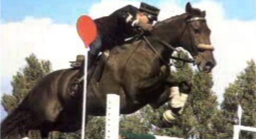 O Cavalo Lusitano – Parte II