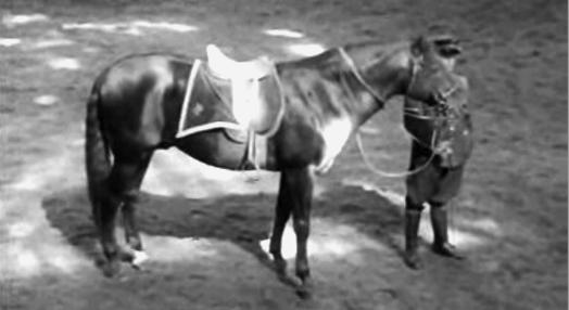 A Festa do Cavalo de Alter