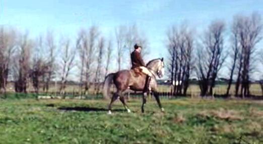 O Cavalo I
