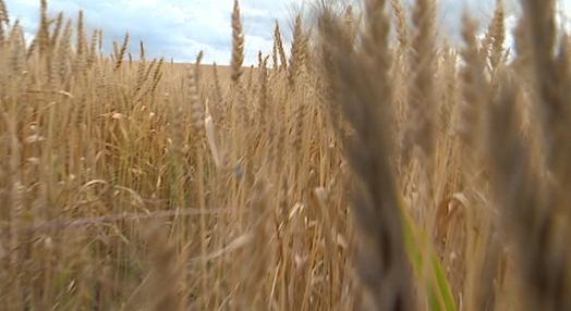 Efeitos da seca na agricultura