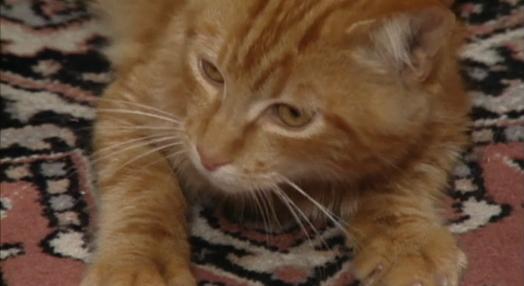 O Gato no Presépio
