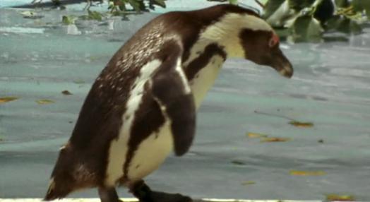 O Pinguim