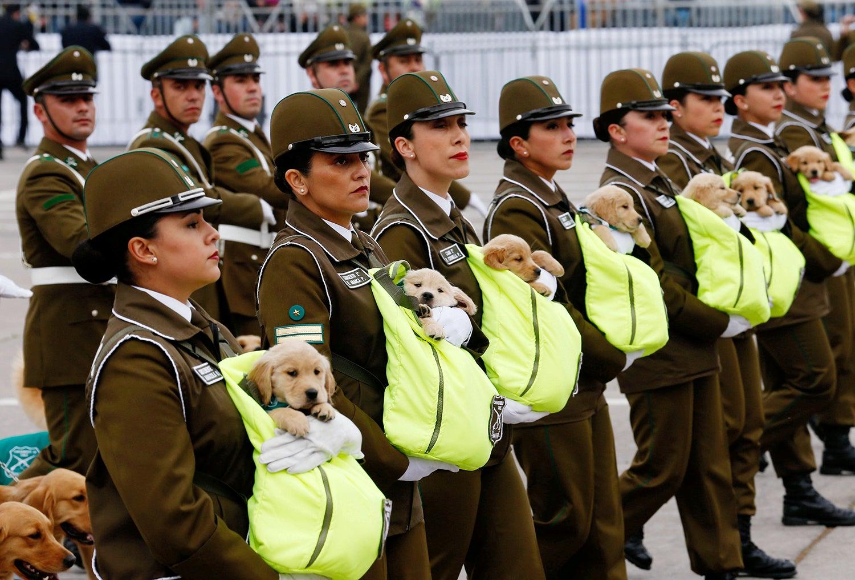 Apresentação dos novos cães polícias do Chile /Rodrigo Garrido - Reuters