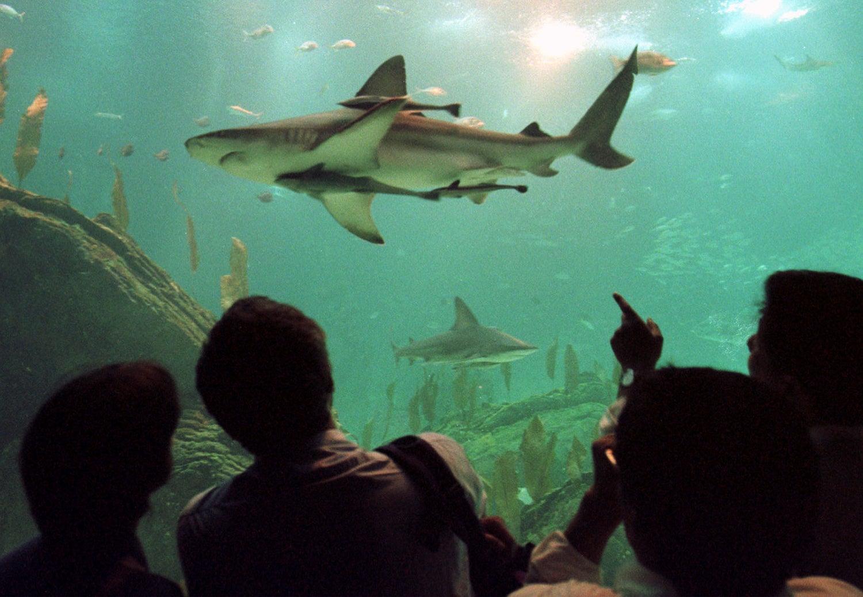 No Oceanário /Foto: Enrique Shore - Reuters
