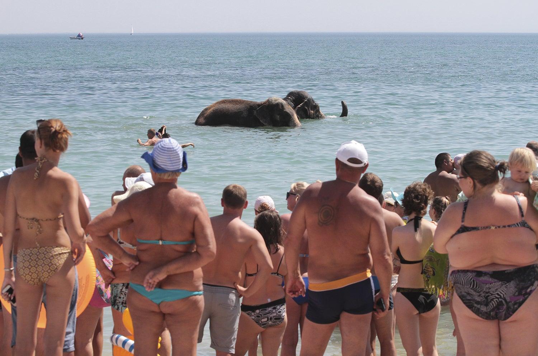 Elefantes de um circo foram à praia na Crimeia /Pavel Rebrov - Reuters