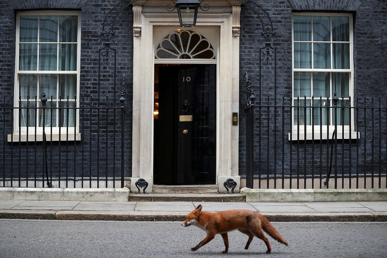 """Um """"visitante"""" passa pela residência oficial da primeira-ministra inglesa em Downing Street /Hannah Mckay - Reuters"""