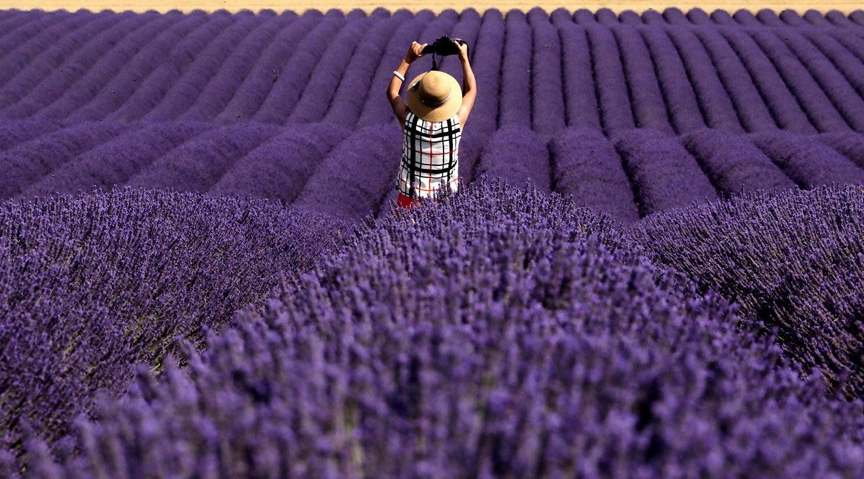 Campos de lavanda na China /Eric Gaillard - Reuters