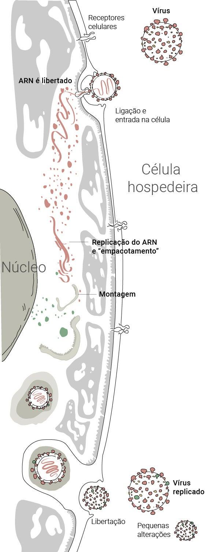 ilustração celula hospedeira