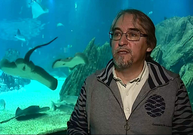 O médico dos Tubarões