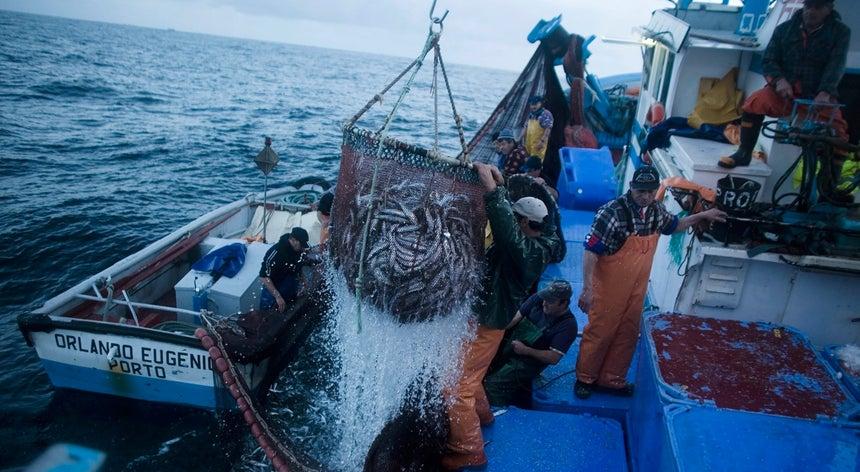 Resultado de imagem para Pesca da sardinha volta a ser proibida até 21 de maio e limitada até 31 de julho
