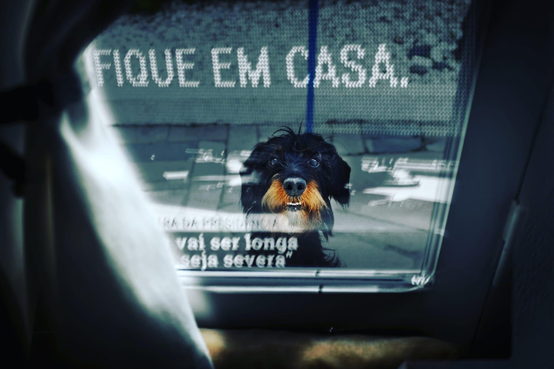 Créditos fotográficos: Gonçalo Borges Dias/DR