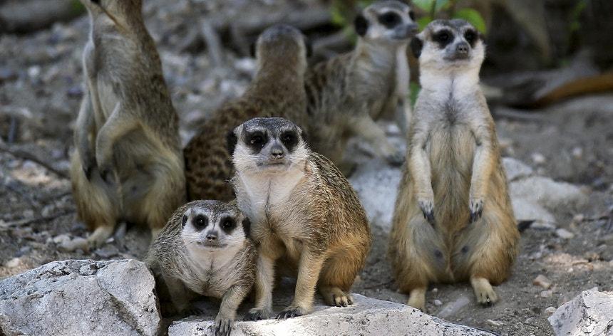 Covid-19. Jardim zoológico alemão admite abater animais para ...